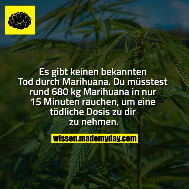 Es gibt keinen bekannten Tod durch Marihuana. Du müsstest rund 680 kg Marihuana in nur 15 Minuten rauchen, um eine tödliche Dosis zu dir zu nehmen.