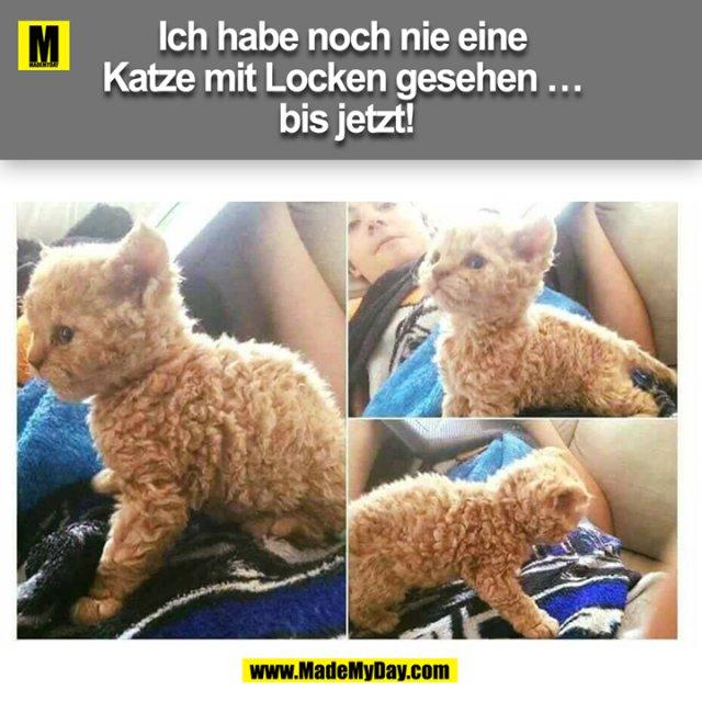 Ich habe noch nie eine Katze mit Locken gesehen ... bis jetzt!<br />