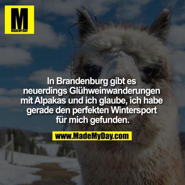 In Brandenburg gibt es neuerdings Glühweinwanderungen mit Alpakas und ich glaube, ich habe gerade den perfekten Wintersport für mich gefunden.