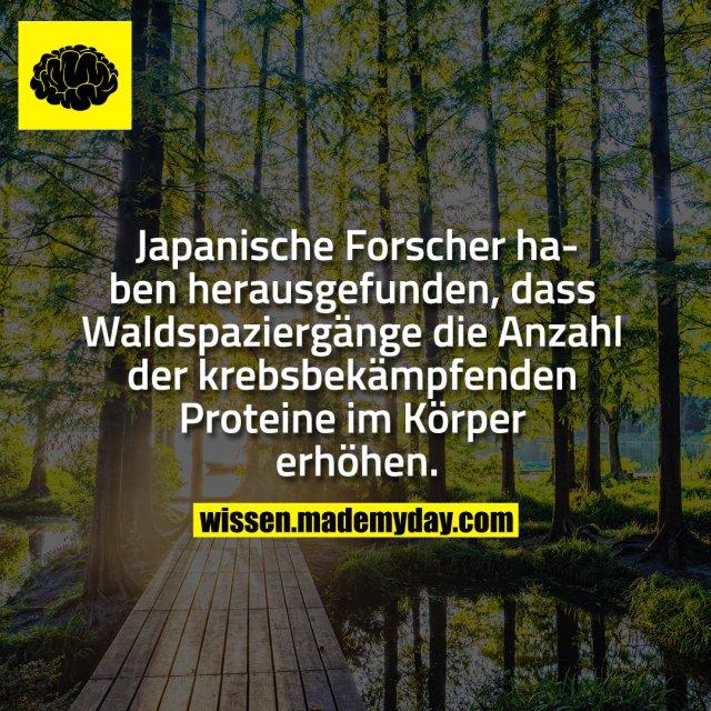 Japanische Forscher haben herausgefunden, dass Waldspaziergänge die Anzahl der krebsbekämpfenden Proteine im Körper erhöhen.