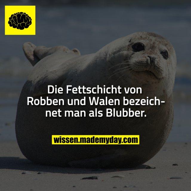 Die Fettschicht von Robben und Walen bezeichnet man als Blubber.