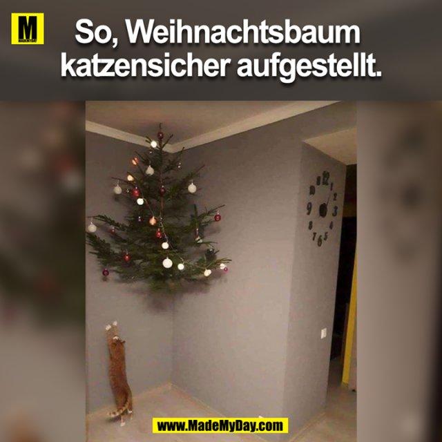So Weihnachtsbaum Katzensicher Aufgestellt Made My Day