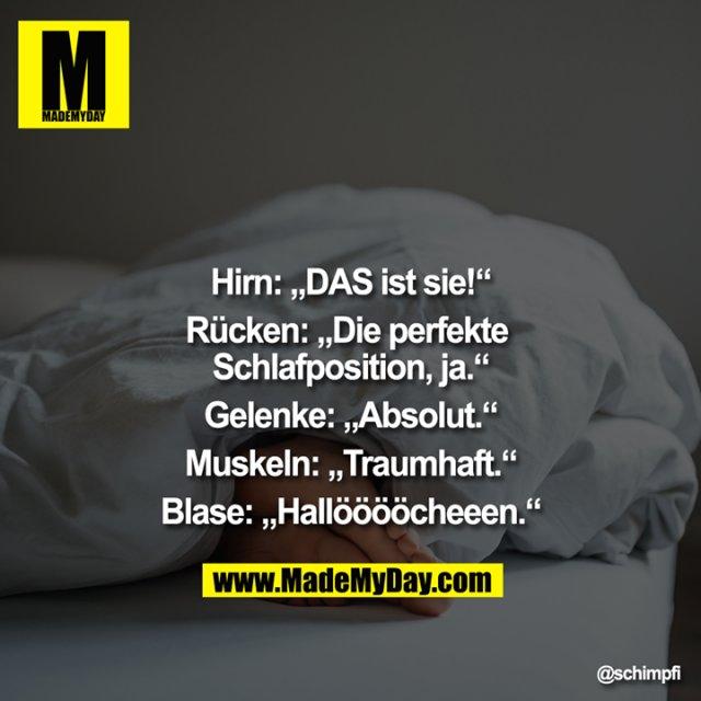 """Hirn: """"DAS ist sie!""""<br /> Rücken: """"Die perfekte Schlafposition, ja.""""<br /> Gelenke: """"Absolut.""""<br /> Muskeln: """"Traumhaft.""""<br /> Blase: """"Hallööööcheeen."""""""