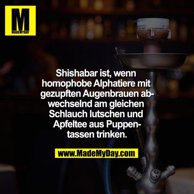 Shishabar Ist Wenn Homophobe Alphatiere Made My Day