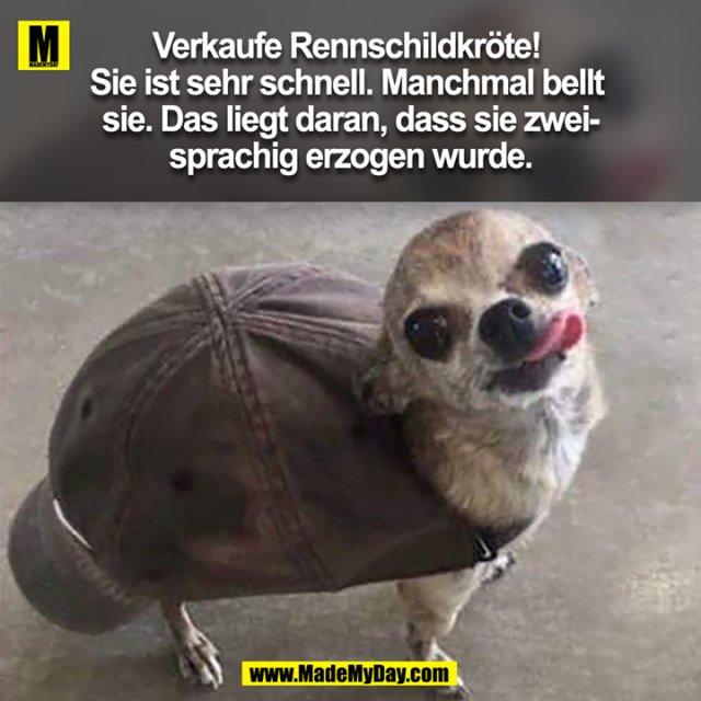 Verkaufe Rennschildkröte! Sie ist sehr schnell. Manchmal bellt sie. Das liegt daran, dass sie zweisprachig erzogen wurde.