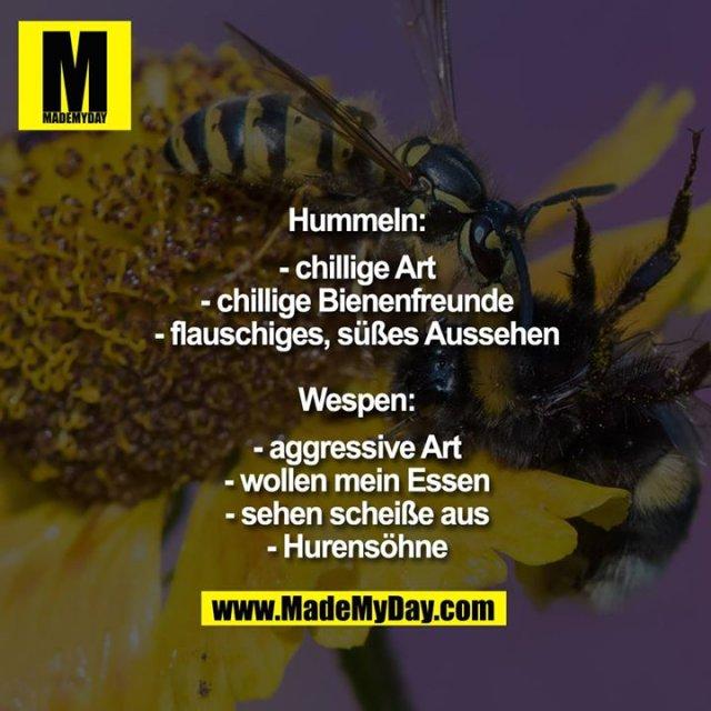 Hummeln:<br /> - chillige Art<br /> - chillige Bienenfreunde<br /> - flauschiges, süßes Aussehen<br /> <br /> Wespen:<br /> - aggressive Art<br /> - wollen mein Essen<br /> - sehen scheiße aus<br /> - Hurensöhne