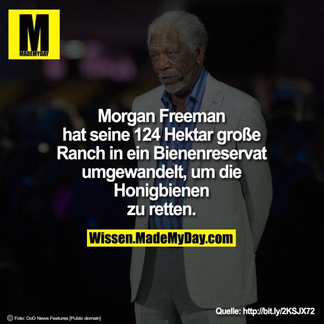 Morgan Freeman hat seine 124 Hektar große Ranch in ein Bienenreservat umgewandelt, um die Honigbienen zu retten.