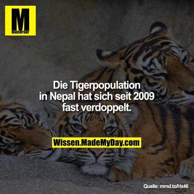Die Tigerpopulation<br /> in Nepal hat sich seit 2009<br /> fast verdoppelt.