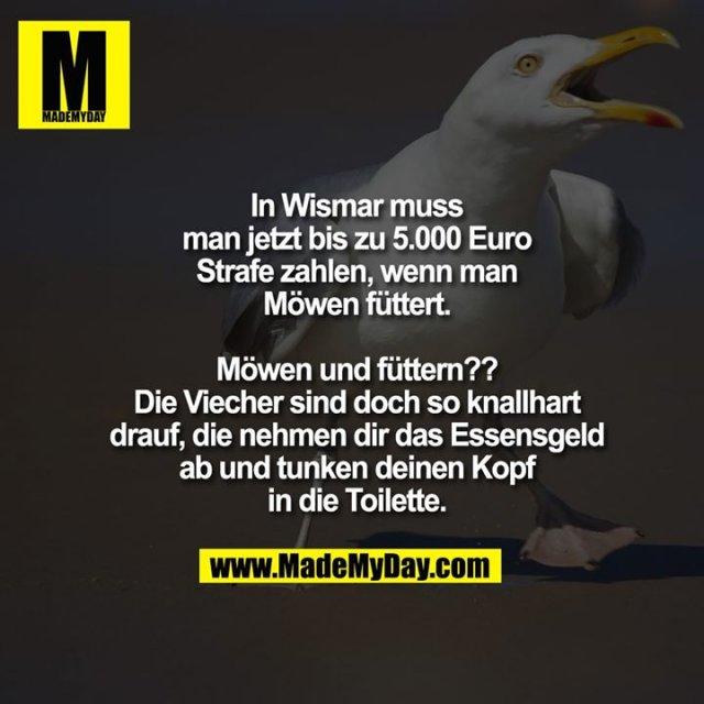 In Wismar muss man jetzt bis zu 5.000 Euro Strafe zahlen, wenn man Möwen füttert.<br /> <br /> Möwen und füttern?? Die Viecher sind doch so knallhart drauf, die nehmen dir das Essensgeld ab und tunken deinen Kopf in die Toilette.