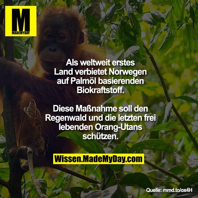 Als weltweit erstes Land verbietet Norwegen auf Palmöl basierenden Biokraftstoff.<br /> Diese Maßnahme soll den Regenwald und die letzten frei lebenden Orang-Utans schützen.
