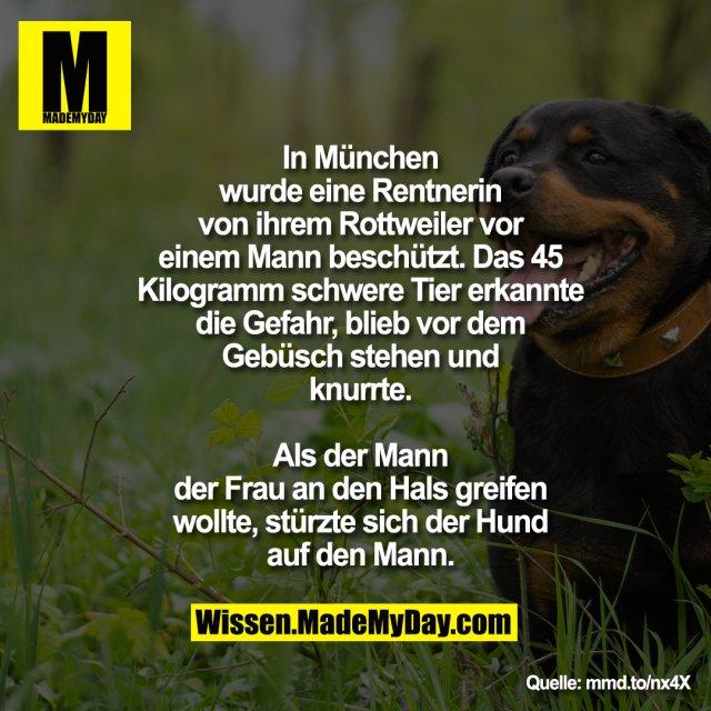 In München wurde eine Rentnerin von<br /> ihrem Rottweiler vor einem Mann<br /> beschützt. Das 45 Kilogramm schwere<br /> Tier erkannte die Gefahr, blieb vor dem<br /> Gebüsch stehen und knurrte. Als der<br /> Mann der Frau an den Hals greifen<br /> wollte, stürzte sich der Hund auf den<br /> Mann.