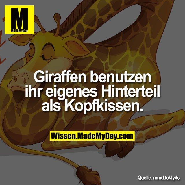 Giraffen benutzen ihr eigenes Hinterteil als Kopfkissen.