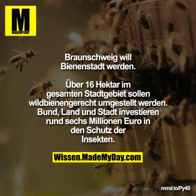 Braunschweig will Bienenstadt werden.<br /> Über 16 Hektar im gesamten Stadtgebiet<br /> sollen wildbienengerecht umgestellt<br /> werden. Bund, Land und Stadt<br /> investieren rund sechs Millionen Euro in<br /> den Schutz der Insekten.