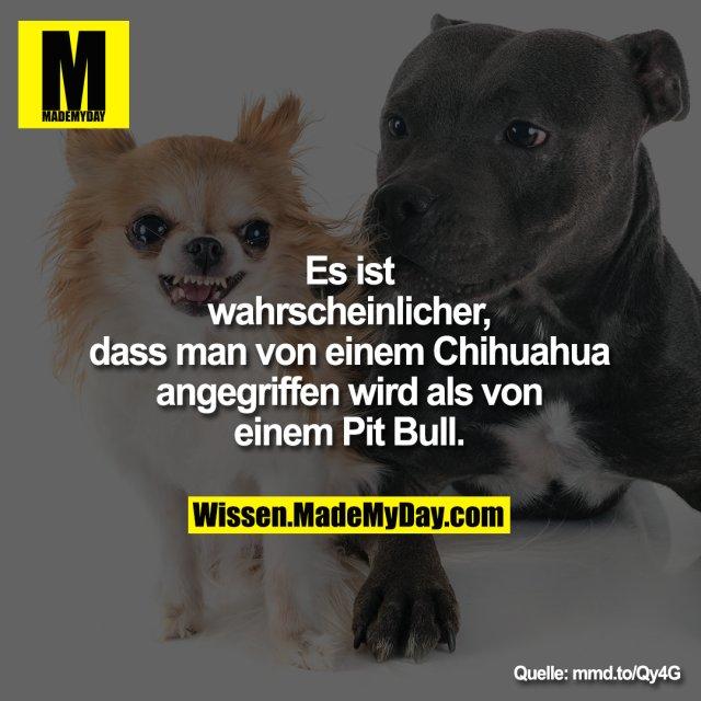 Es ist wahrscheinlicher, dass man<br /> von einem Chihuahua angegriffen<br /> wird als von einem Pit Bull.