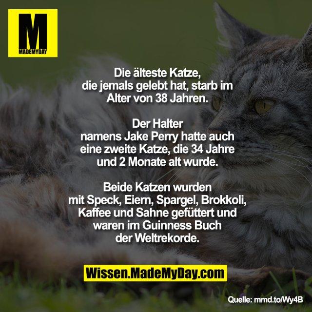 Die älteste Katze, die jemals gelebt hat,<br /> starb im Alter von 38 Jahren. Der Halter<br /> namens Jake Perry hatte auch eine<br /> zweite Katze, die 34 Jahre und 2<br /> Monate alt wurde. Beide Katzen wurden<br /> mit Speck, Eiern, Spargel, Brokkoli,<br /> Kaffee und Sahne gefüttert und waren<br /> im Guinness Buch der Weltrekorde.