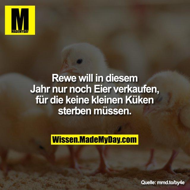 Rewe will in diesem Jahr nur<br /> noch Eier verkaufen, für die<br /> keine kleinen Küken sterben<br /> müssen.