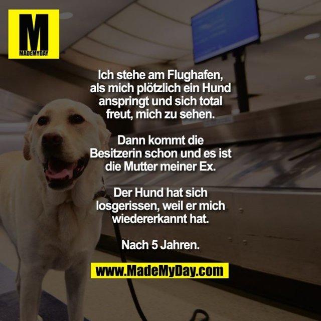 Ich stehe am Flughafen, als mich plötzlich ein Hund anspringt und sich total freut, mich zu sehen.<br /> Dann kommt die Besitzerin schon und es ist die Mutter meiner Ex.<br /> Der Hund hat sich losgerissen, weil er mich wiedererkannt hat. Nach 5 Jahren.