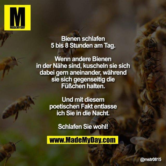 Bienen schlafen 5 bis 8 Stunden am Tag.<br /> <br /> Wenn andere Bienen in der Nähe sind, kuscheln sie sich dabei gern aneinander, während sie sich gegenseitig die Füßchen halten.<br /> <br /> Und mit diesem poetischen Fakt entlasse ich Sie in die Nacht.<br /> Schlafen Sie wohl!