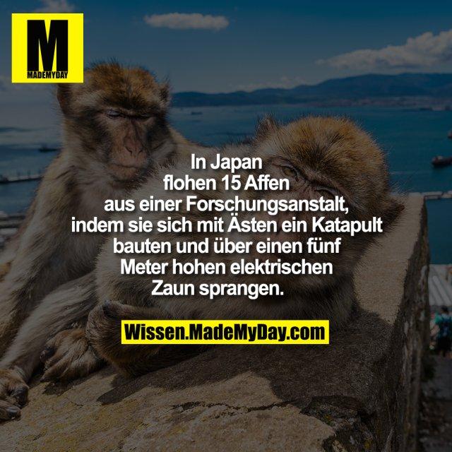 In Japan flohen 15 Affen aus<br /> einer Forschungsanstalt, indem<br /> sie sich mit Ästen ein Katapult<br /> bauten und über einen fünf<br /> Meter hohen elektrischen Zaun<br /> sprangen.