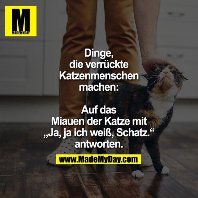 """Dinge, die verrückte<br /> Katzenmenschen machen:<br /> <br /> Auf das Miauen der Katze<br /> mit """"Ja, ja ich weiß,<br /> Schatz."""" antworten."""