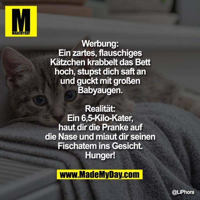 Werbung:<br /> Ein zartes, flauschiges Kätzchen krabbelt das Bett hoch, stupst dich saft an und guckt mit großen Babyaugen.<br /> Realität:<br /> Ein 6,5-Kilo-Kater, haut dir die Pranke auf die Nase und miaut dir seinen Fischatem ins Gesicht.<br /> Hunger!