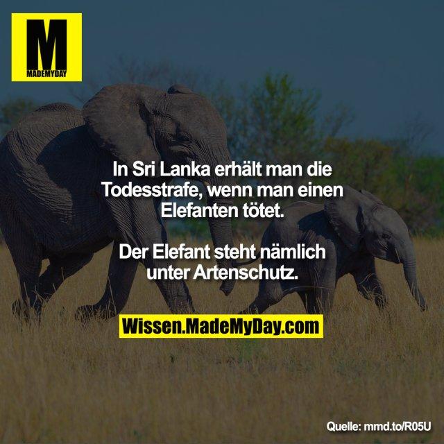 In Sri Lanka erhält man die Todesstrafe,<br /> wenn man einen Elefanten tötet. Der<br /> Elefant steht nämlich unter Artenschutz.<br /> <br /> mmd.to/R05U