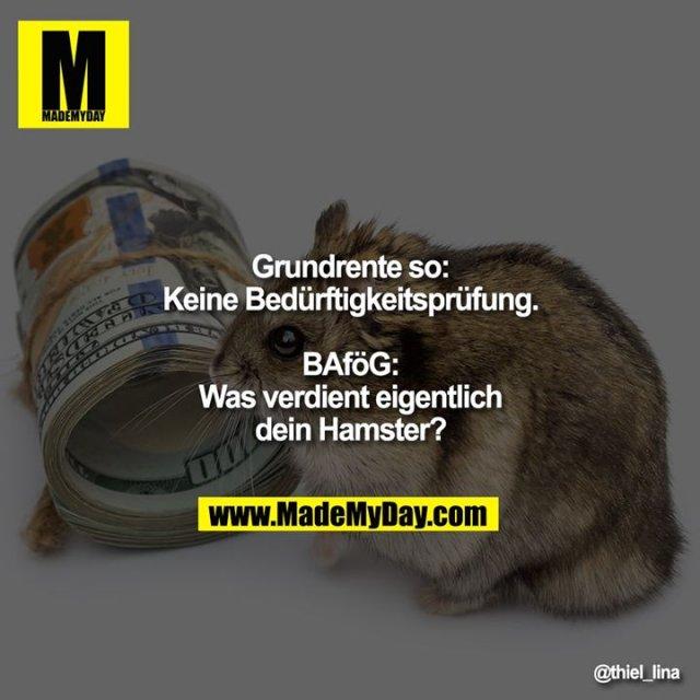Grundrente so:<br /> Keine Bedürftigkeitsprüfung.<br /> <br /> BAföG:<br /> Was verdient eigentlich dein Hamster?