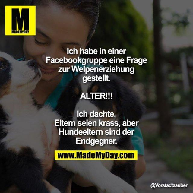 Ich habe in einer Facebookgruppe eine Frage zur Welpenerziehung gestellt.<br /> <br /> ALTER!!!<br /> <br /> Ich dachte, Eltern seien krass, aber Hundeeltern sind der Endgegner.