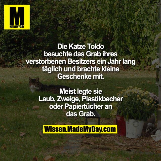 Die Katze Toldo besuchte das Grab ihres verstorbenen Besitzers ein Jahr lang täglich und brachte kleine Geschenke mit.<br /> Meist legte sie Laub, Zweige, Plastikbecher oder Papiertücher an das Grab.