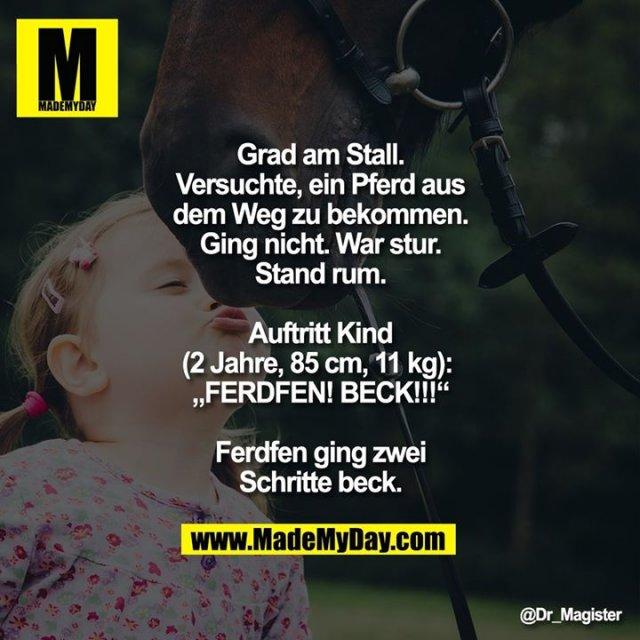 """Grad am Stall. Versuchte, ein Pferd aus dem Weg zu bekommen. Ging nicht. War stur. Stand rum. Auftritt Kind (2 Jahre, 85 cm, 11 kg): <br /> """"FERDFEN! BECK!!!""""<br /> Ferdfen ging zwei Schritte beck."""