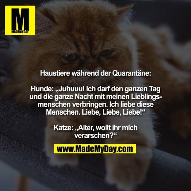 """Haustiere während der Quarantäne:<br /> <br /> Hunde: """"Juhuuu! Ich darf den ganzen Tag und die ganze Nacht mit meinen Lieblingsmenschen verbringen. Ich liebe diese Menschen. Liebe, Liebe, Liebe!"""" <br /> <br /> Katze: """"Alter, wollt ihr mich verarschen?"""""""