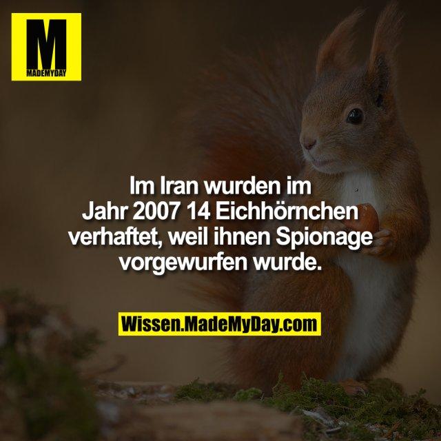 Im Iran wurden im Jahr 2007 14 Eichhörnchen verhaftet, weil ihnen Spionage vorgewurfen wurde.
