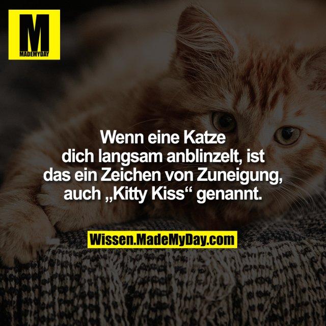 """Wenn eine Katze dich langsam anblinzelt, ist das ein Zeichen von Zuneigung, auch """"Kitty Kiss"""" genannt."""
