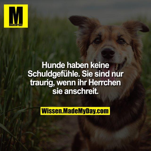 Hunde haben keine Schuldgefühle. Sie sind nur traurig, wenn ihr Herrchen sie anschreit.