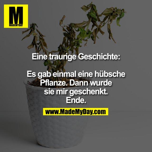 Eine traurige Geschichte: Es gab einmal eine hübsche Pflanze. Dann wurde sie mir geschenkt. Ende.
