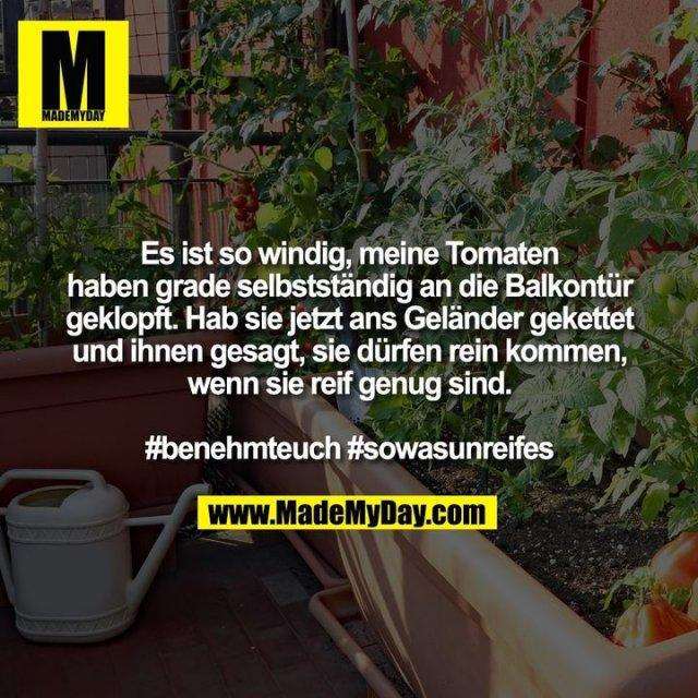 Es ist so windig, meine Tomaten haben grade selbstständig an die Balkontür geklopft. Hab sie jetzt ans Geländer gekettet und ihnen gesagt, sie dürfen rein kommen, wenn sie reif genug sind.<br /> <br /> #benehmteuch #sowasunreifes