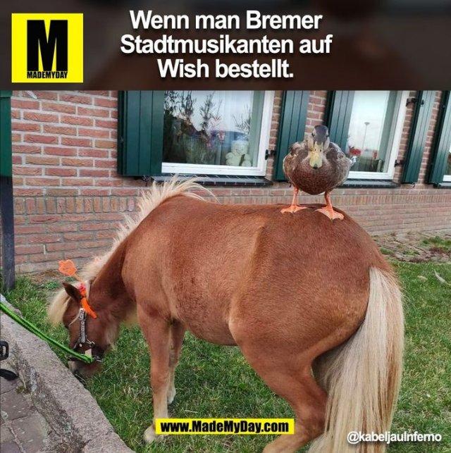 Wenn man Bremer Stadtmusikanten auf Wish bestellt. @kabeljauInferno (BILD)