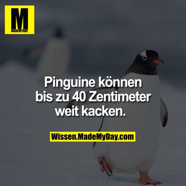 Pinguine können bis zu 40 Zentimeter weit kacken.