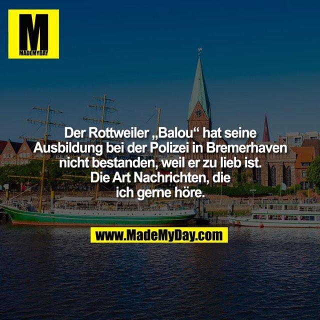 """Der Rottweiler """"Balou"""" hat seine<br /> Ausbildung bei der Polizei in Bremerhaven<br /> nicht bestanden, weil er zu lieb ist.<br /> Die Art Nachrichten, die<br /> ich gerne höre."""