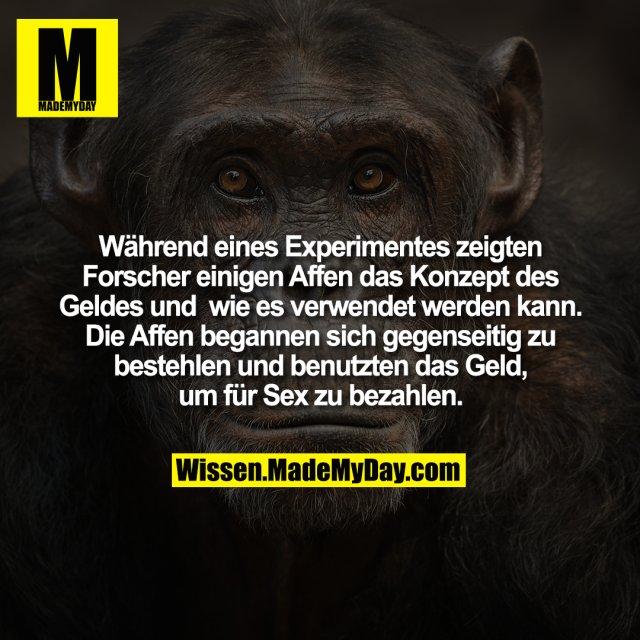 Während eines Experimentes zeigten Forscher einigen Affen das Konzept des Geldes und wie es verwendet werden kann. Die Affen begannen sich gegenseitig zu bestehlen und benutzten das Geld, um für Sex zu bezahlen.