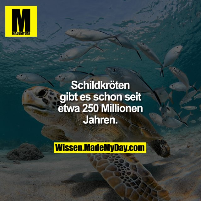 Schildkröten gibt es schon seit etwa 250 Millionen Jahren.