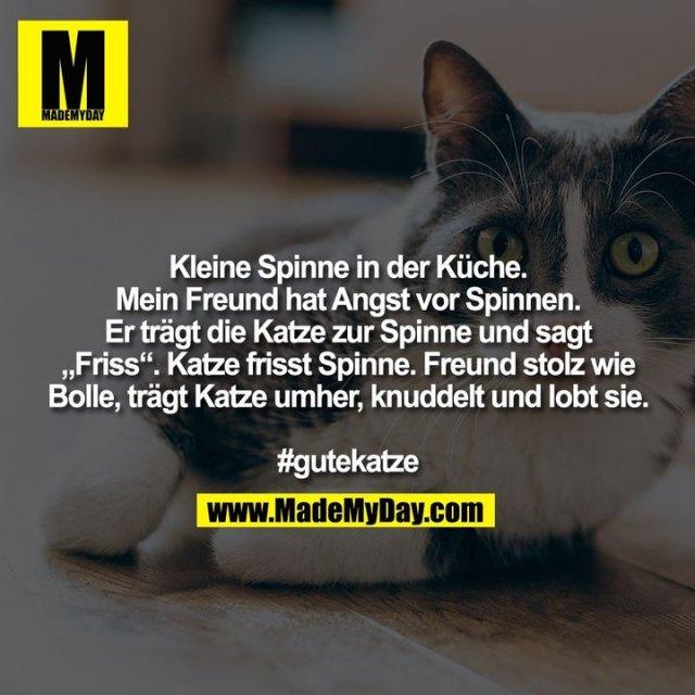 """Kleine Spinne in der Küche.<br /> Mein Freund hat Angst vor Spinnen.<br /> Er trägt die Katze zur Spinne und sagt<br /> """"Friss"""". Katze frisst Spinne. Freund stolz wie<br /> Bolle, trägt Katze umher, knuddelt und lobt sie.<br /> <br /> #gutekatze"""