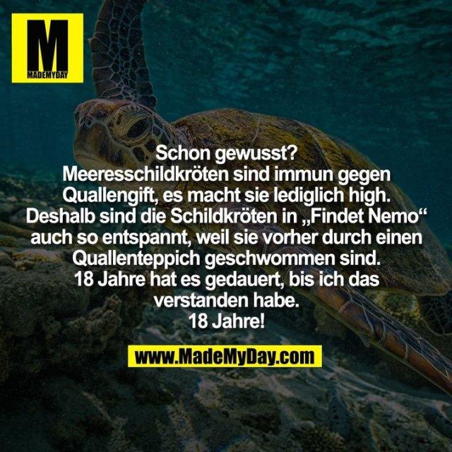 """Schon gewusst?<br /> Meeresschildkröten sind immun gegen<br /> Quallengift, es macht sie lediglich high.<br /> Deshalb sind die Schildkröten in """"Findet Nemo""""<br /> auch so entspannt, weil sie vorher durch einen<br /> Quallenteppich geschwommen sind.<br /> 18 Jahre hat es gedauert, bis ich das<br /> verstanden habe.<br /> 18 Jahre!"""