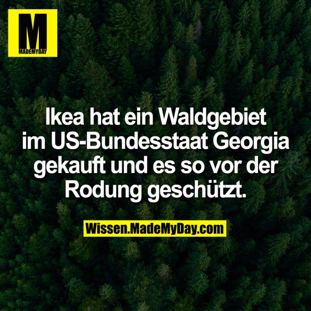 Ikea hat ein Waldgebiet im US-Bundesstaat Georgia gekauft und es so vor der Rodung geschützt.