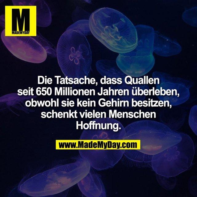 Die Tatsache, dass Quallen<br /> seit 650 Millionen Jahren überleben,<br /> obwohl sie kein Gehirn besitzen,<br /> schenkt vielen Menschen<br /> Hoffnung.