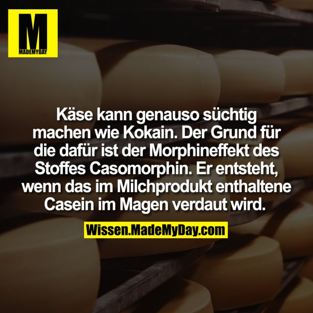 Käse kann genauso süchtig machen wie Kokain. Der Grund für die dafür ist der Morphineffekt des Stoffes Casomorphin. Er entsteht, wenn das im Milchprodukt enthaltene Casein im Magen verdaut wird.