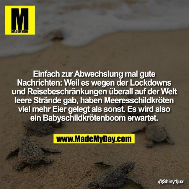Einfach zur Abwechslung mal gute<br /> Nachrichten: Weil es wegen der Lockdowns<br /> und Reisebeschränkungen überall auf der Welt<br /> leere Strände gab, haben Meeresschildkröten<br /> viel mehr Eier gelegt als sonst. Es wird also<br /> ein Babyschildkrötenboom erwartet.