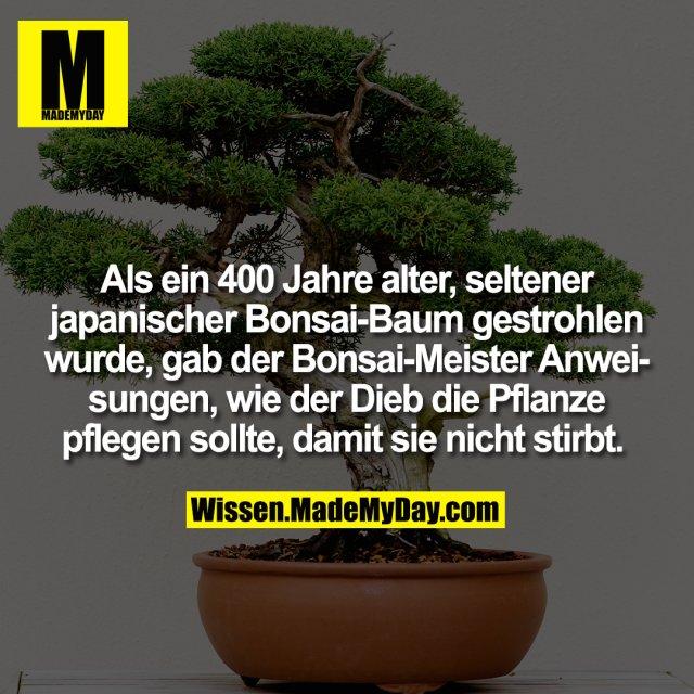 Als ein 400 Jahre alter, seltener japanischer Bonsai-Baum gestrohlen wurde, gab der Bonsai-Meister Anweisungen, wie der Dieb die Pflanze pflegen sollte, damit sie nicht stirbt.