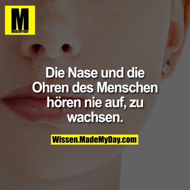 Die Nase und die Ohren des Menschen hören nie auf, zu wachsen.