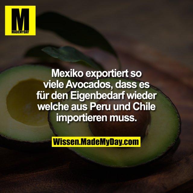 Mexiko exportiert so viele Avocados, dass es für den Eigenbedarf wieder welche aus Peru und Chile importieren muss.